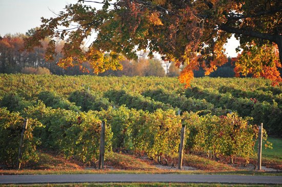 Michigan Wine Regions