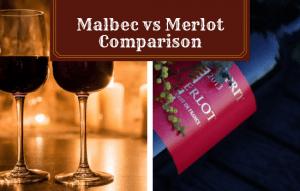 Malbec vs Merlot: Which Will You Love More?