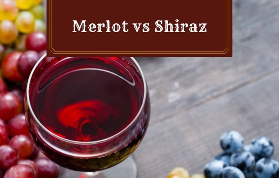 Merlot vs Shiraz: What are the Main Differences?