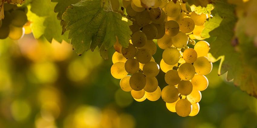 Michigan Wine Varieties