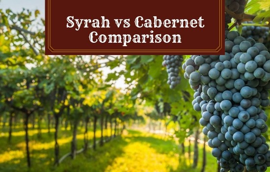 You are currently viewing Syrah vs Cabernet – Which Variety of Wine Will You Love More?