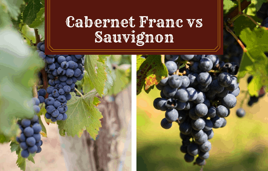 Cabernet Franc vs Sauvignon – Which Wine Variety is Best?