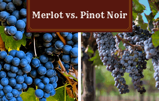 Merlot vs Pinot Noir: Compare and Contrast These Two Lovely Reds