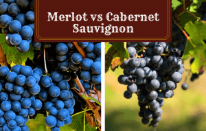 Merlot vs Cabernet Sauvignon: Battle of the Reds