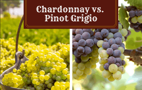 Chardonnay vs Pinot Grigio – Which Will You Enjoy More?