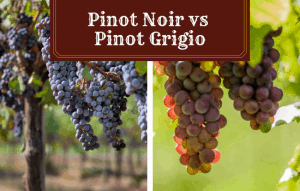 Pinot Noir vs Pinot Grigio – Which Will You Love More?