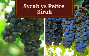 Syrah vs Petite Sirah – Find the Best Grapes and Flavor!