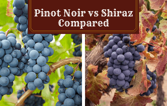 You are currently viewing Pinot Noir vs Shiraz – Showdown of Two Popular Red Wines!