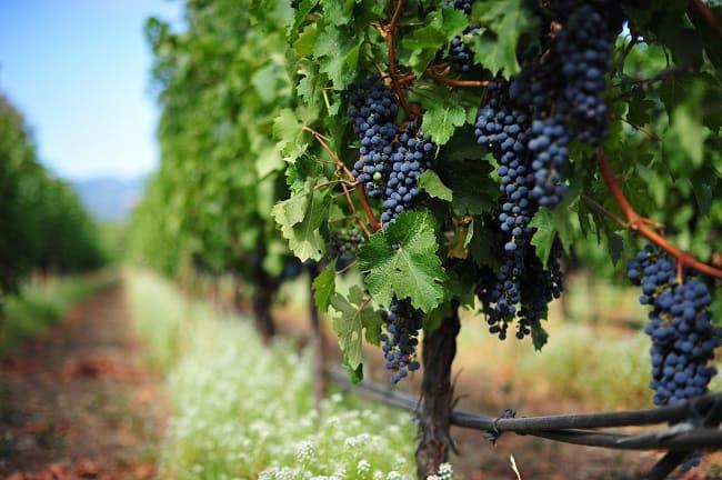 Stone Edge Farm Winery