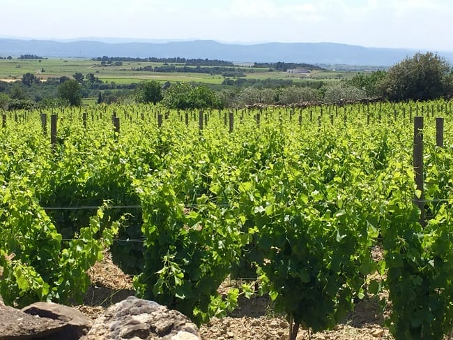 Terroir Vineyard
