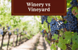Winery vs Vineyard: What's the Difference?
