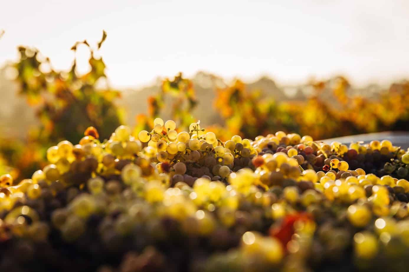 california wine produced