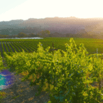 California Wine Club Review [2021]: What to Expect & Pricing Options