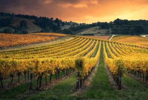 Best Lebanon Wine Regions With 6 Top Picks [2021]