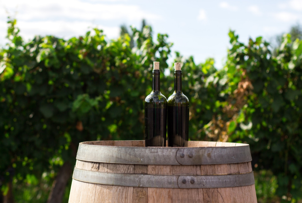 You are currently viewing The Best of Long Island's North Fork Wineries: A Complete Guide