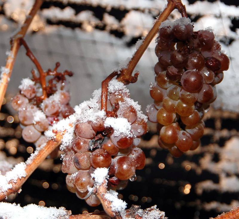 EISWEIN - Definition and synonyms of eiswein in the English dictionary